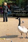 Hyde Park Duck